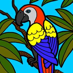 Schöne Papagei